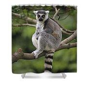 Ring-tailed Lemur Sitting Madagascar Shower Curtain
