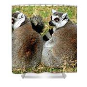 Ring-tailed Lemurs Lemur Catta Shower Curtain