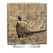 Ringneck Pheasant Rooster Shower Curtain