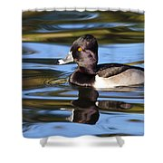 Rings Around Ring-necked Duck Shower Curtain