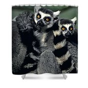 Ringtailed Lemurs Portrait Endangered Wildlife Shower Curtain
