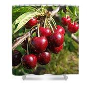 Ripe Cherries Shower Curtain