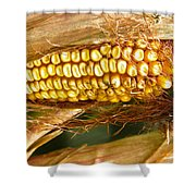 Ripe Corn Shower Curtain