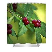 Red Berries Botanical Christmas Art Shower Curtain