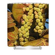 Ripe Seagrapes Shower Curtain