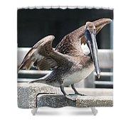 Pier Pelican Shower Curtain