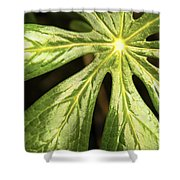 Rising Star The Mayapple Of Spring Shower Curtain