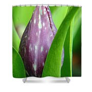 Rising To The Bloom Shower Curtain