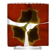 Rittenhouse Tulip I Shower Curtain