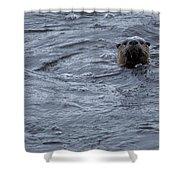 River Otter   #0695 Shower Curtain