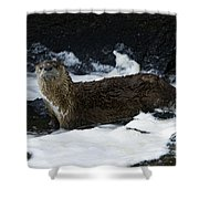 River Otter   #0978 Shower Curtain