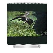 River Otter-7714 Shower Curtain