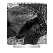 River Otter In Black And White Shower Curtain