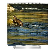 River Otter On A Rock Shower Curtain