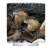River Otter Trio   #0922 Shower Curtain