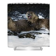 River Otters   #1030 Shower Curtain