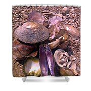 River Shells Shower Curtain