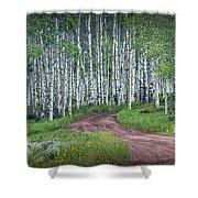 Road Through A Birch Tree Grove Shower Curtain