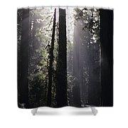Road Through Redwoods Shower Curtain