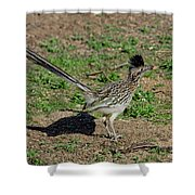 Roadrunner Male With Food Shower Curtain