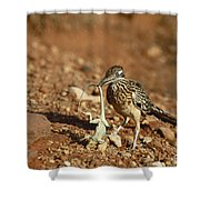 Roadrunner With Lizard Shower Curtain