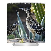 Roadrunners At Play  Shower Curtain