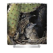 Roadrunners In Nest Shower Curtain