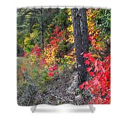Roadside Fall Colors Shower Curtain
