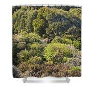 Roadside Forest Scenery Shower Curtain