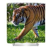 Roaming Tiger Shower Curtain