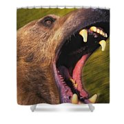 Roaring Grizzly Bears Face Rocky Shower Curtain