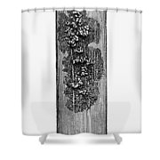 Robert Koch: Bacilli, 1890 Shower Curtain