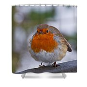 Robin 1 Shower Curtain