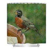 Robin 1 Shower Curtain