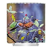 Robin And Berries Shower Curtain