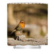 Robin At Feeder Shower Curtain