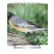 Robin Eating Mealworm Shower Curtain