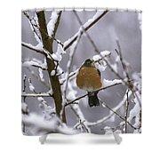 Robin In Snow Shower Curtain
