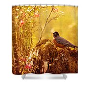 Robin In Spring Shower Curtain