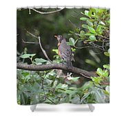 Robin In The Brush Shower Curtain
