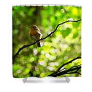Robin In The Glade Shower Curtain