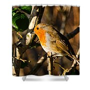 Robin In The Hedgerow Shower Curtain