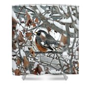 Robin In The Trees Shower Curtain