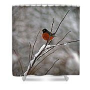 Robin In Winter Shower Curtain
