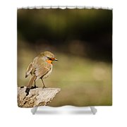 Robin On A Log Shower Curtain