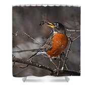 Robin Pictures 100 Shower Curtain