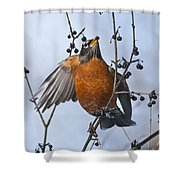 Robin Pictures 84 Shower Curtain
