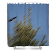 Robin Projectile Shower Curtain