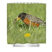 Robin Vs Worm Shower Curtain