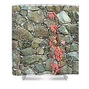 Rock And Ivy Design  Shower Curtain
